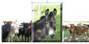 cowshorse