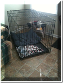 If they are packing, I need to make sure they have all my toys. Let me look around my kennel...