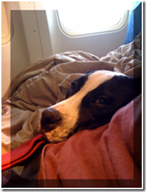 Oh, I like this plane better. I have my own seat beside my mom...